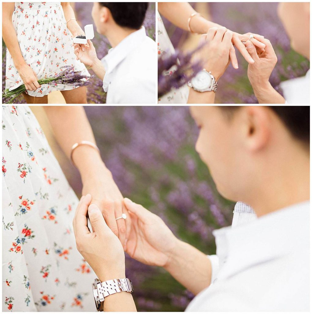 marriage proposal in lavender of provence